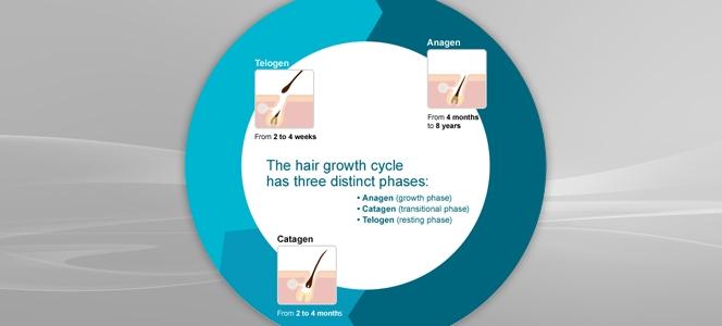 Ilustracija ciklusa rasta kose